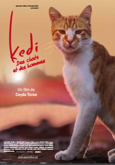 kedi (Copier)