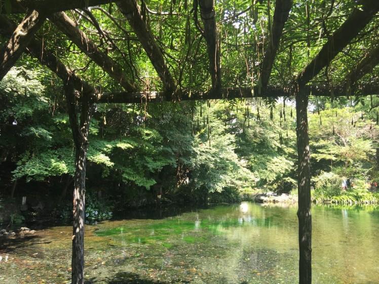 jardin au japon (Copier).JPG