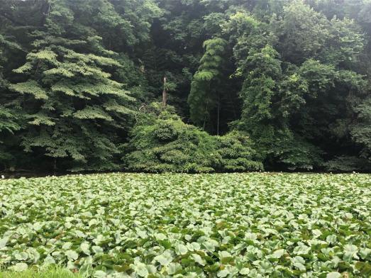 Le parc de Shakujii à Tokyo